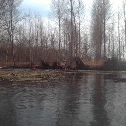 kayakistes sur la seugne